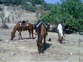 טיול סוסים רומנטי