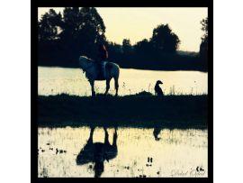 טיול סוסים זוגי